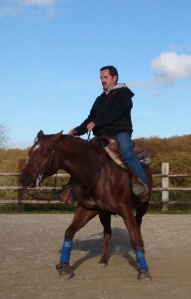 Éducation des chevaux près d'Évreux, dans l'Eure